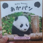 赤ちゃんパンダが可愛すぎて・・・