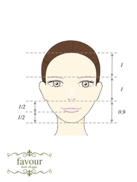 日本人好みの可愛い顔の比率 顎の長さが平均顔よりも短い